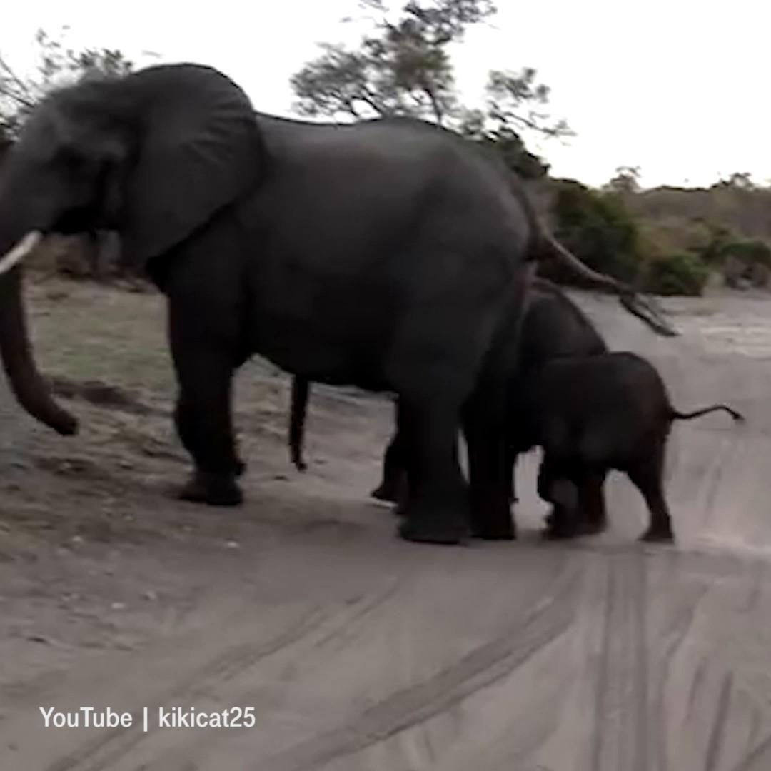 00613_EBL_SO_Elefant niest und erschreckt sich_VPU.mp4: image 6
