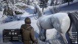 Hier findet ihr eins der besten Pferde (Weißer Araber)